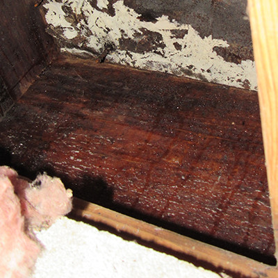 Subflooring in a crawl space that has moisture and fungus.