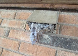 Bird nest obstructing vent.