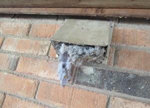 Bird nest obstructing vent.